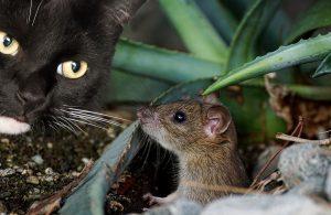 souris dératisation algo3d lutte contre les nuisibles